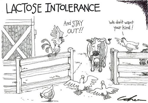 Lactose-intolerant