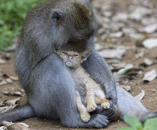 Ss-100826-monkey-kitten-01.ss_full