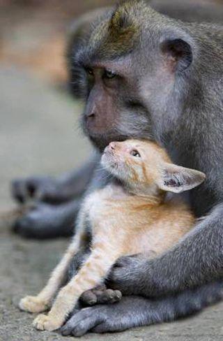 Ss-100826-monkey-kitten-06.ss_full