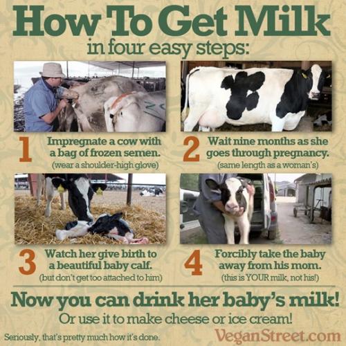 How to get milk - by VeganStreet